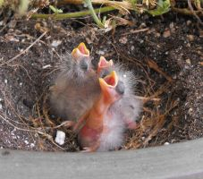 Baby birds outside my door by JLHilton