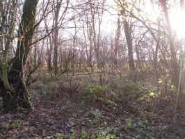 Copse stock 14 by RSmales