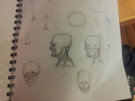 human head anatomy practice by foofighters111