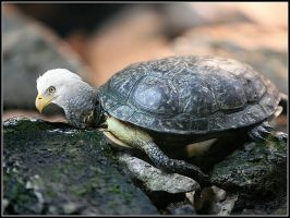 bird turtle ..... by fisher57