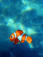 Finding Nemo by SublimeBudd
