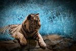 Tiger in Infrared by Amoakk
