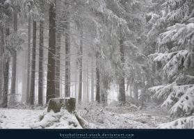 Winter Forest with Fog 02 by kuschelirmel-stock