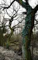 Old  spooky tree with ivy ~ STOCK by AStoKo by AStoKo
