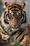 4427 - Sumatran Tiger by Jay-Co