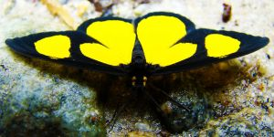 Butterfly by Mauricioluis