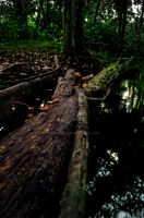 Deep Forest by irmans20