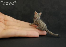 Miniature Spotted Tabby Cat Handmade Sculpture by ReveMiniatures
