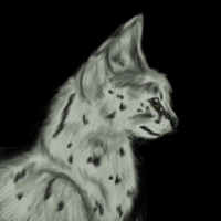 White serval by RayCrystal