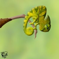 Leafy Chameleon by FauxHead
