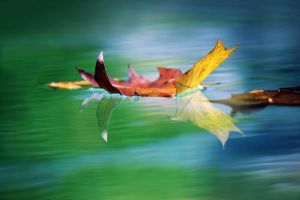 A Falling Leaf by sanjab