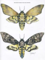 Death's Head Hawk Moth by TeresaMurphy