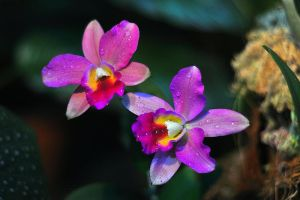 Exhibition of orchids and bromeliads by Zaratra