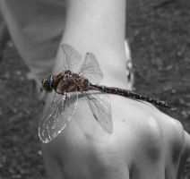 Dragonfly 2 by Nothing4Free