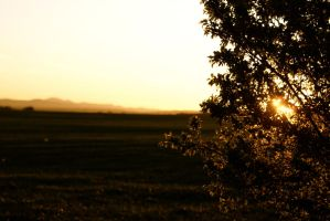 Bulgaria by venigesheva
