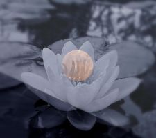 Lotus Moon Reflections by BrightStar2