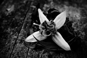 Black and White Flower by parablev