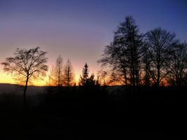 Trees at sunset by Tallon-1