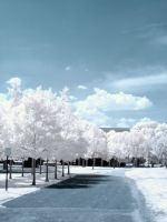 Sunny road - infrared by ilimel