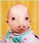 Pig headed by HumanDescent
