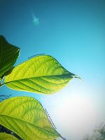 Photosynthesis by vjun
