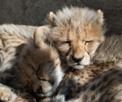 Sleeping Kittens by FSGPhotography