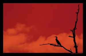 silhouette by grugster