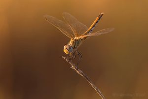 The color of gold at sunset by Amersill