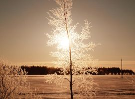 Cold light 2 by annbuht