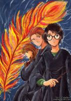 Harry Potter and the Order of the Phoenix by Alkanet