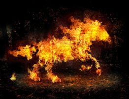 fire horse by salhi