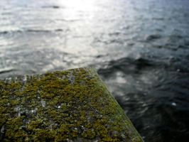 Moss on a pier by xMandy92x