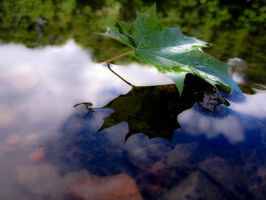 Acer Platanoides by HellinS