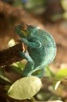 Another chameleon by Bagoly