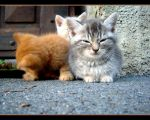 encore des chatons... by Brout-IcO