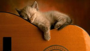 A Cat Lies On My Guitar by Kamila97