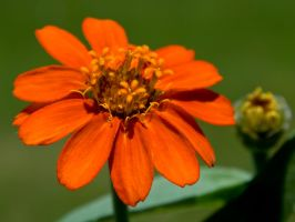 Profusion Orange by AreteEirene