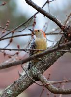 Rainy Day Bird 12-22-13 by Tailgun2009