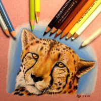 Cheetah by Wolfish-Dreams