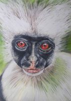 monkey drawing by nut2