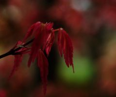 Red Mood by LidiaRossana