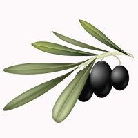 Olives, olive branch by weberica