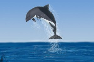 South African Dolphin by LugalaiEstonia