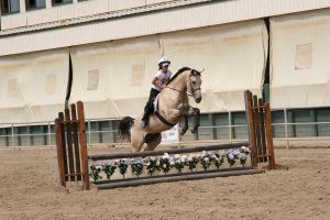 Buckskin Gelding Jumping by HorseStockPhotos