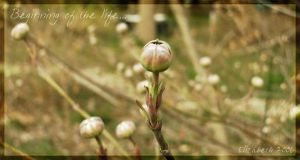 Beginning of the life... by Emanuelle