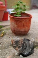 The kitty and the flowerpot by Jorapache