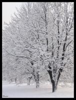 Snowtrees by Dairi