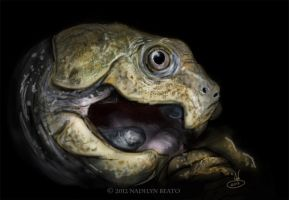 Chinese Big-headed turtle (Platysternon megacephal by NadilynBeato