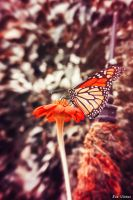 Vintage Butterfly by EveVictus