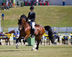STOCK - Gold Coast Show 351 by fillyrox